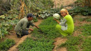 brachoua-permaculture-maroc-developpement-durable-une-746x420