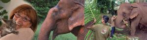 somm69-elephants